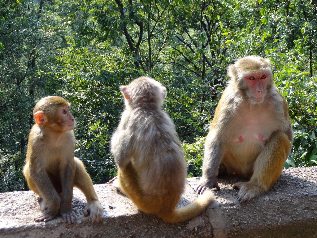它们看起来温驯很多,是不是因为它们是母猴子,满满的都是母爱?