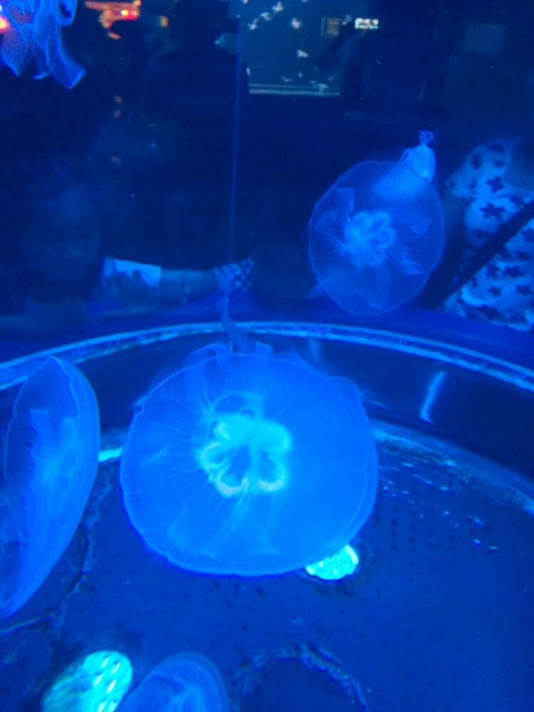 北京动物园后面的海洋馆与太平洋海底世界哪个好玩