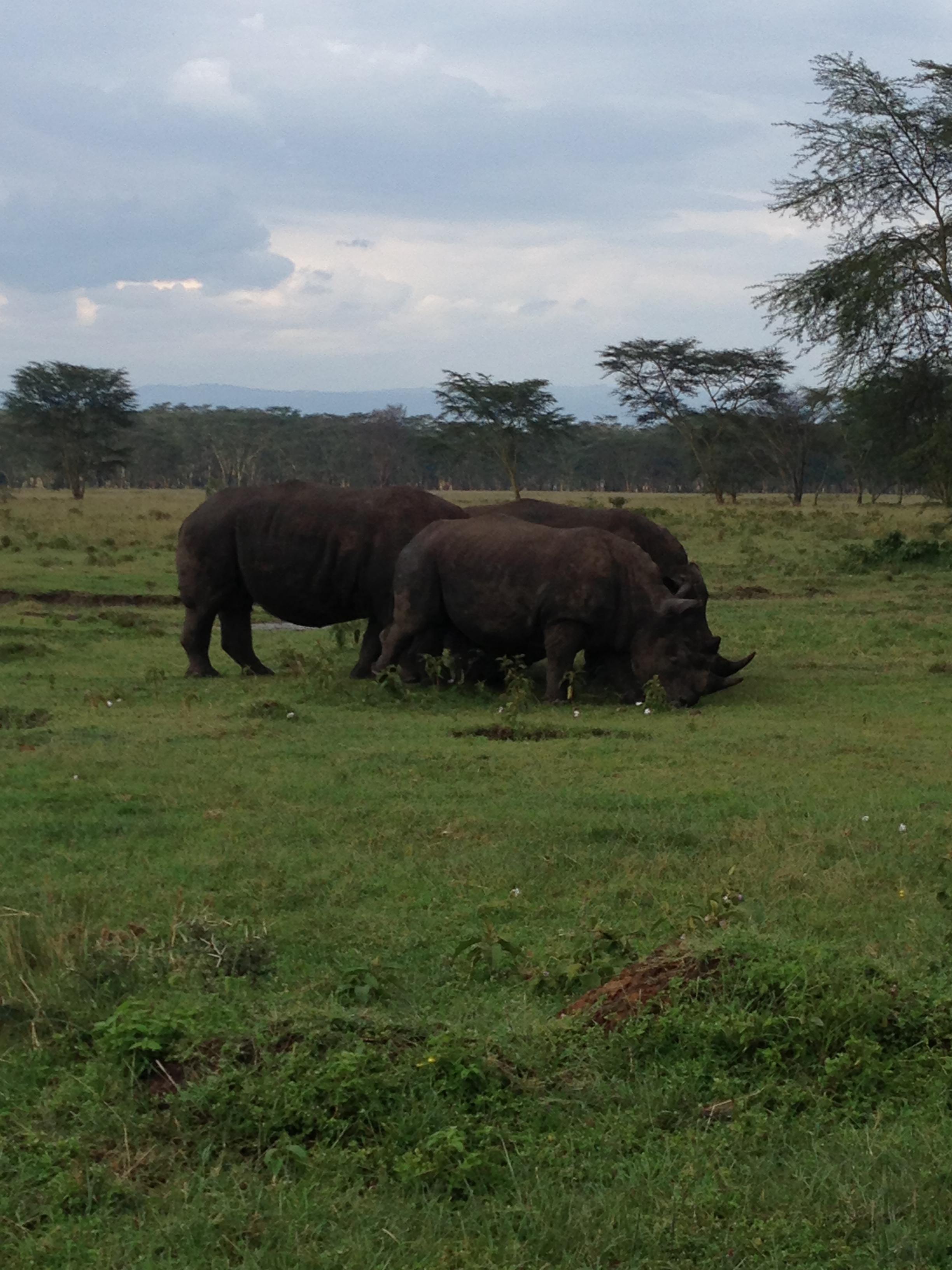 弱肉强食-非洲肯尼亚动物大迁徙