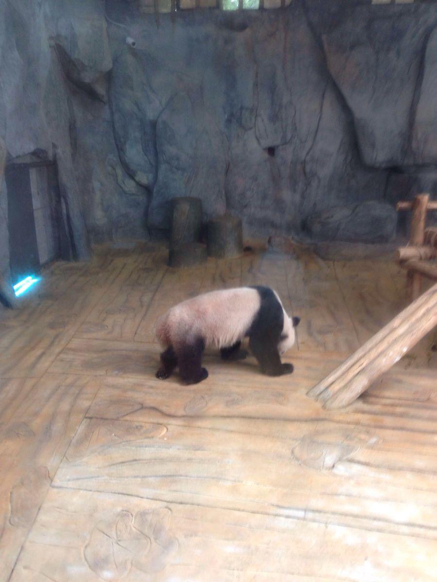【携程攻略】广东深圳野生动物园景点