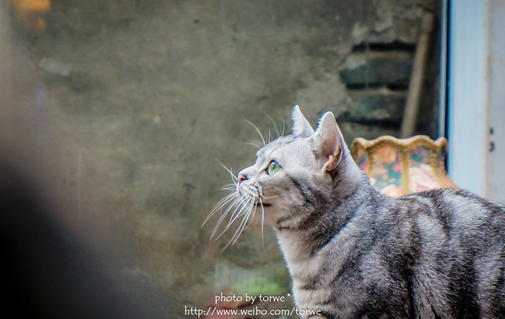 馋猫的图片可爱
