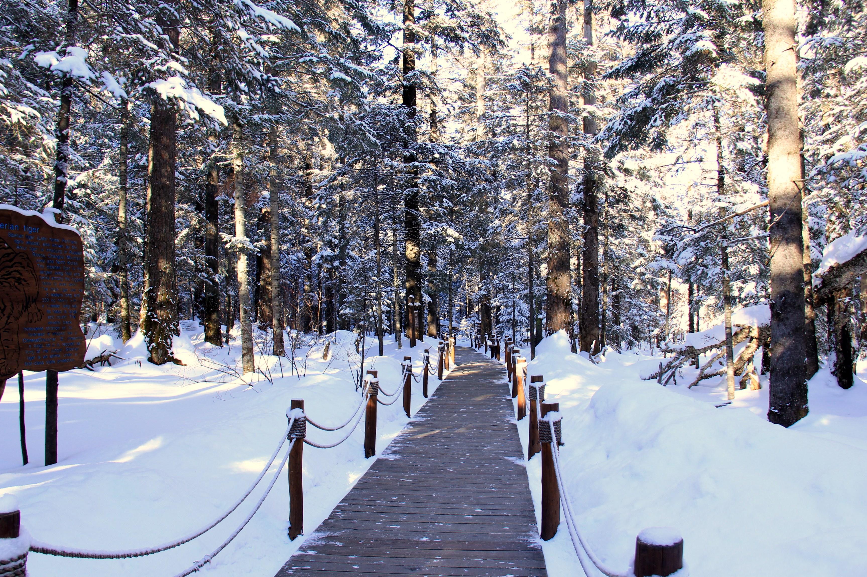 东北二人转(长白山,雪乡,哈尔滨冬游记)图片
