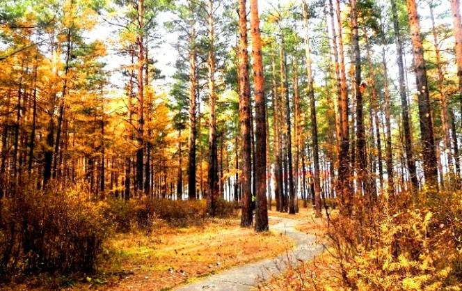 松苑原始森林公园