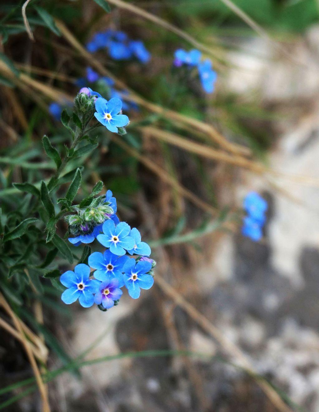好可爱的小兰花,很少见到,这是爬上峭壁拍的.