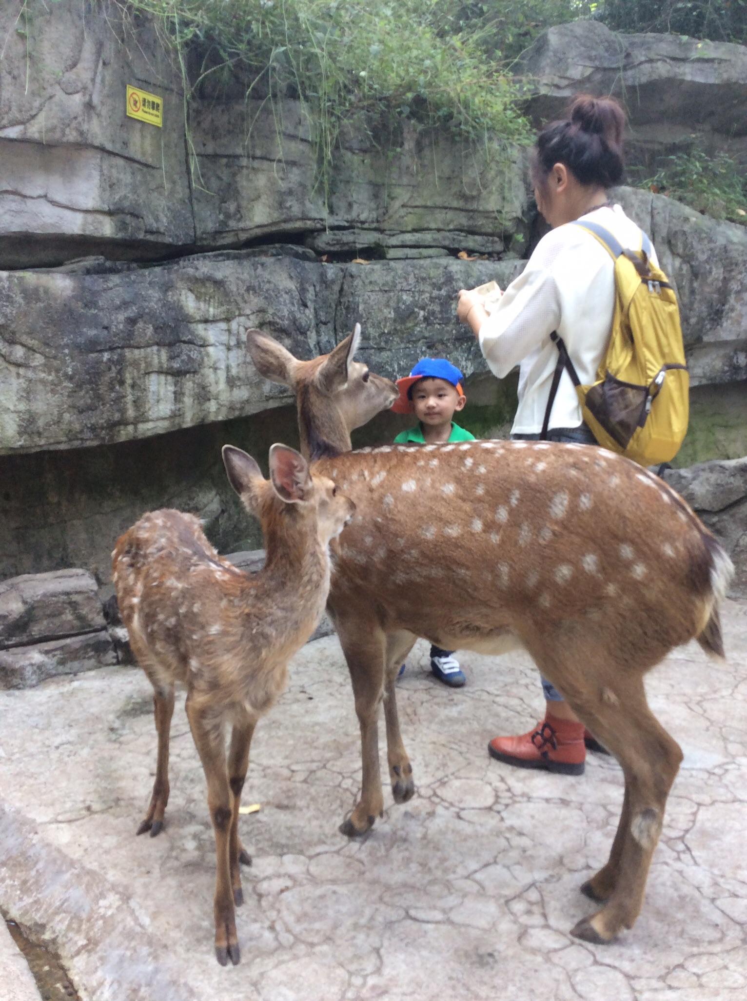 风景很好空气清新;尤其野生动物区与动物近距离接触,孩子给动物喂食