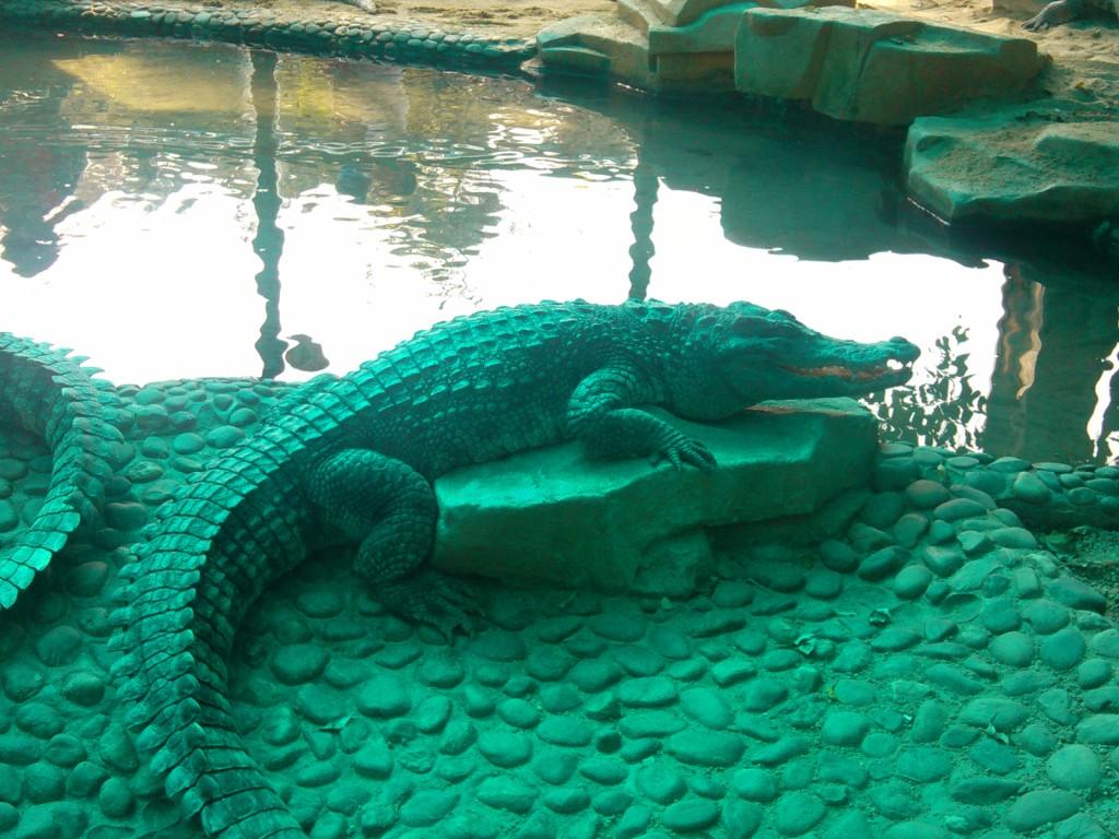 周末想去个公园之类的拍照玩玩,而正好广州动物园是个大概可以消耗半天的时间的地方。而自己买票要20,但是ctrip订票可以便宜两块钱,于是下了个周六订单,周日来。 订单号:805228225,链接http://vacations.ctrip.com/dest/t6784.html?para=pkg--1649165---startcity--32 周日11点吃过午饭出发,地铁5号线到动物园南门大概12点,逛到4点半左右出园,算是一个很靠谱的半天行程吧。个人喜欢各种萌鸟和食草萌物,所以在这期间消耗了大量的时间