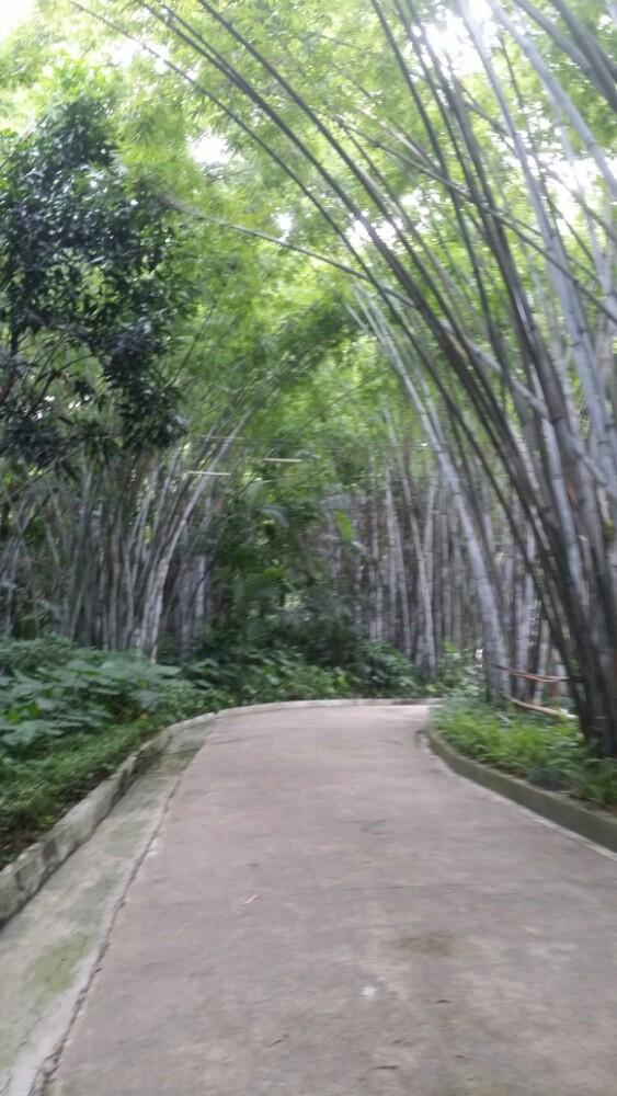 长隆野生动物世界 越秀公园 岭南印象园 中国科学院华南植物园 珠江