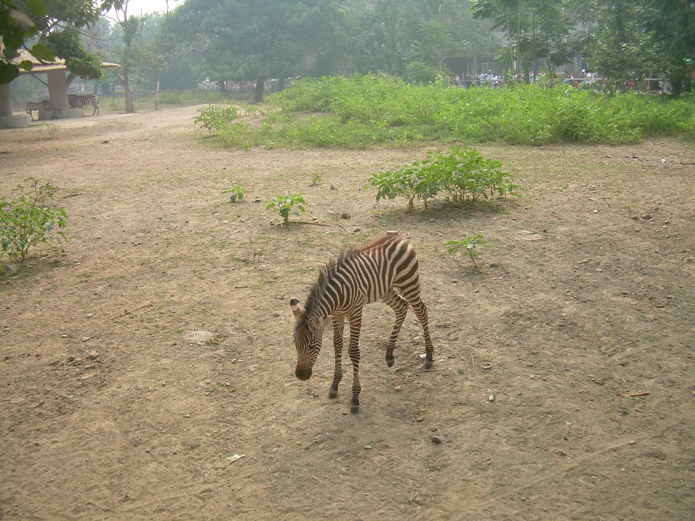 动物园非洲动物区