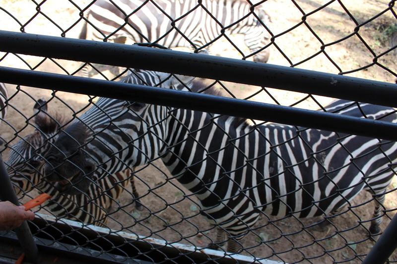 北京野生动物园位于大兴区榆垡镇万亩森林之中,紧临京开路,距玉泉营