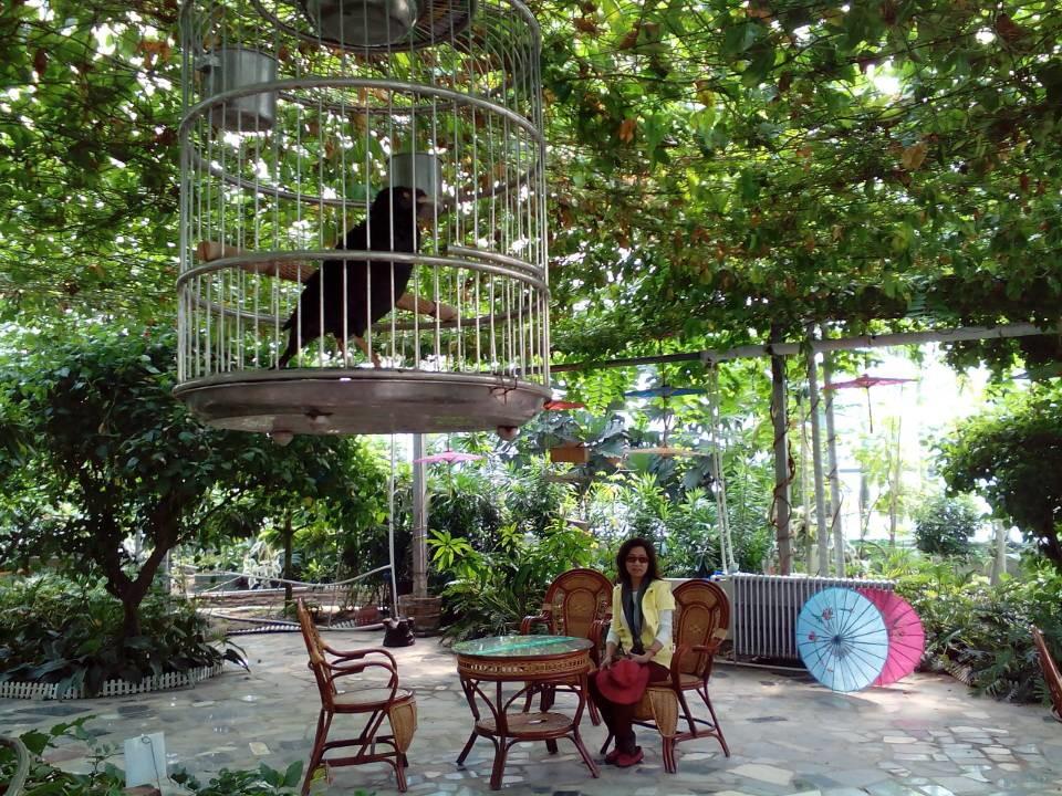 【携程攻略】北京呀路古热带植物园好玩吗,北京呀路古