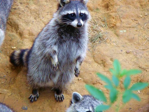 动物们相互依偎的照片