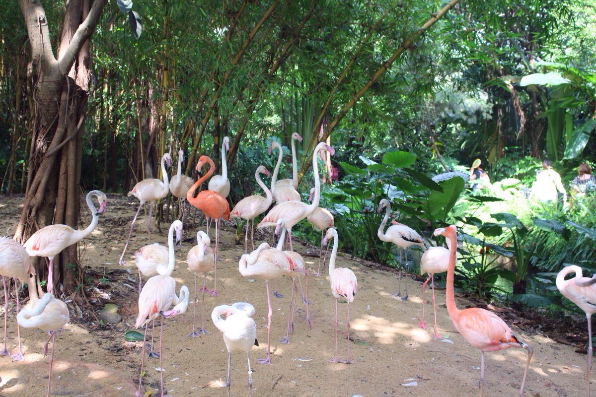 长隆酒店+大马戏+野生动物园|广州游记-携程旅行