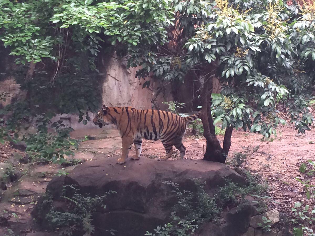 广州动物园里的春意|广州游记-携程旅行
