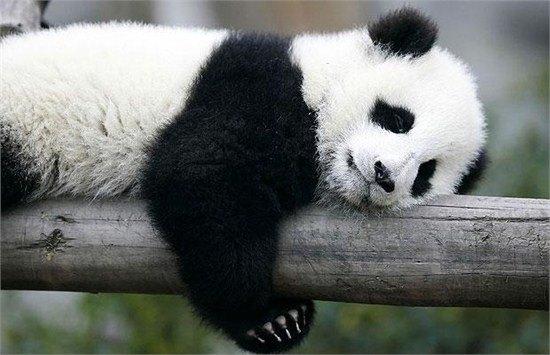 【萌照组图 不点后悔】睡觉卖萌的动物大曝光