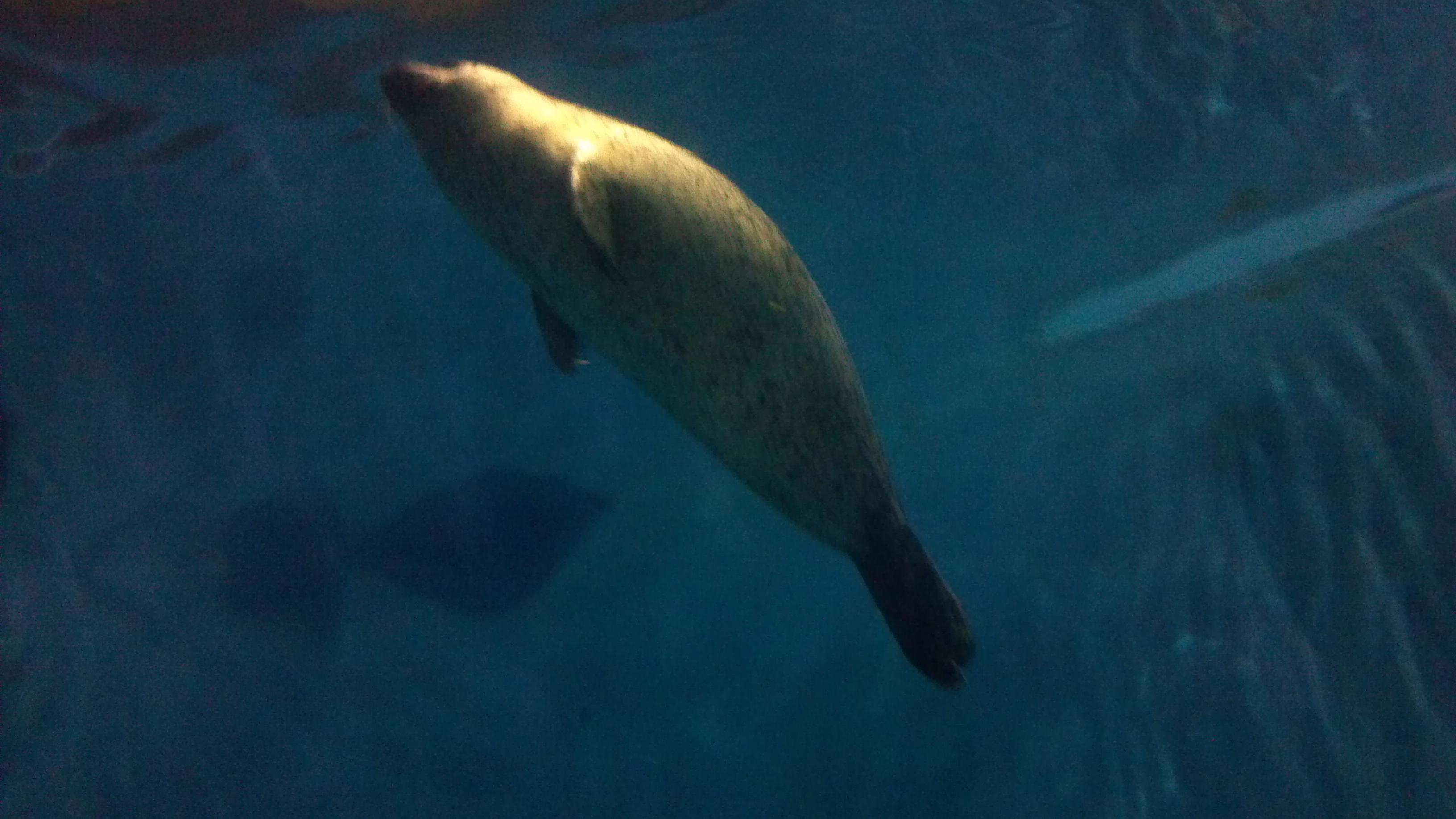 青岛极地,动物天堂