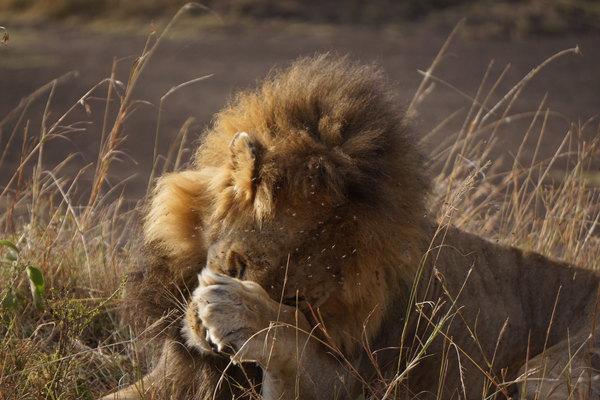 野肯尼亚,奔向心目中的动物世界 三 D7 D8