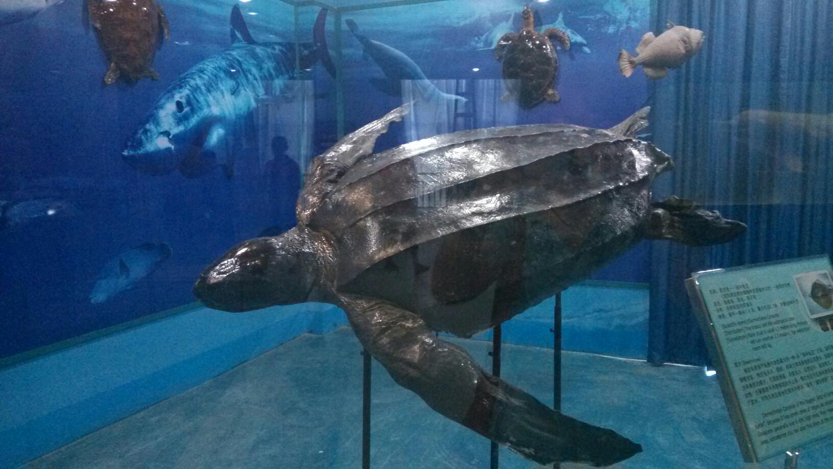海底动物标本