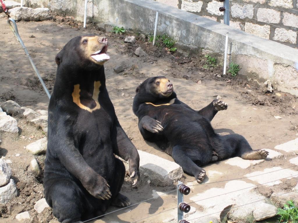 [我要去大溪地]上海野生动物园随手拍3