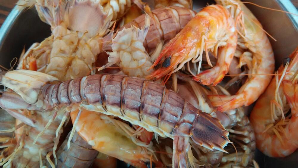 皮皮虾旅行图标素材