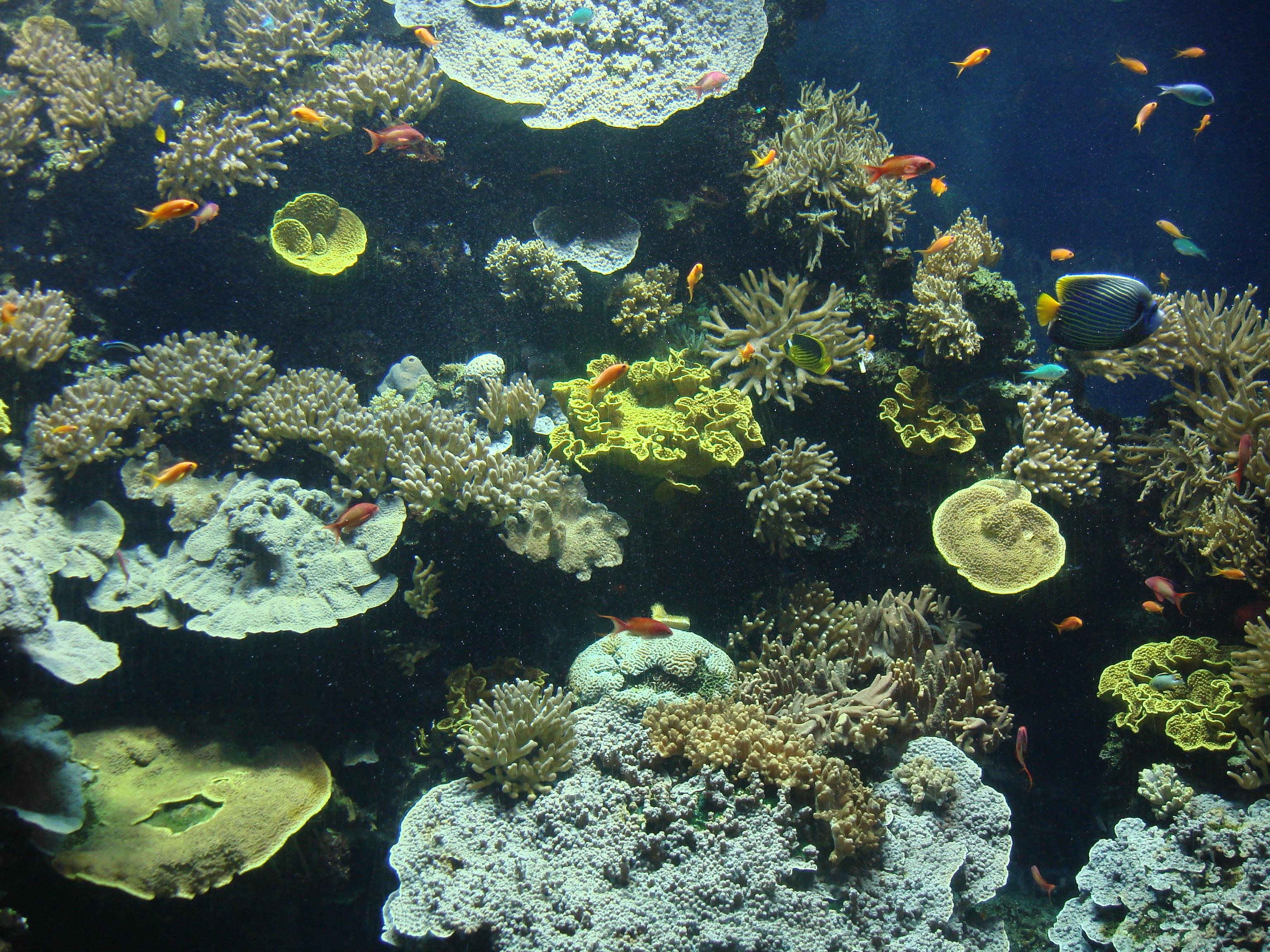 无数海生动物和植物的标本