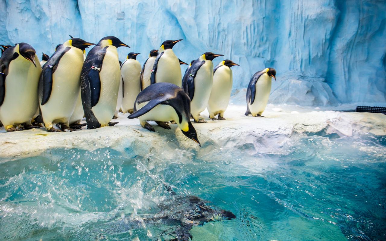壁纸 动物 企鹅 1280_800