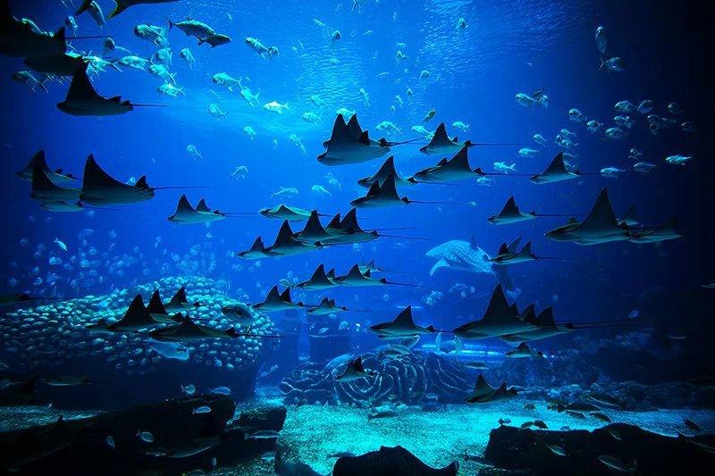 海洋感背景素材