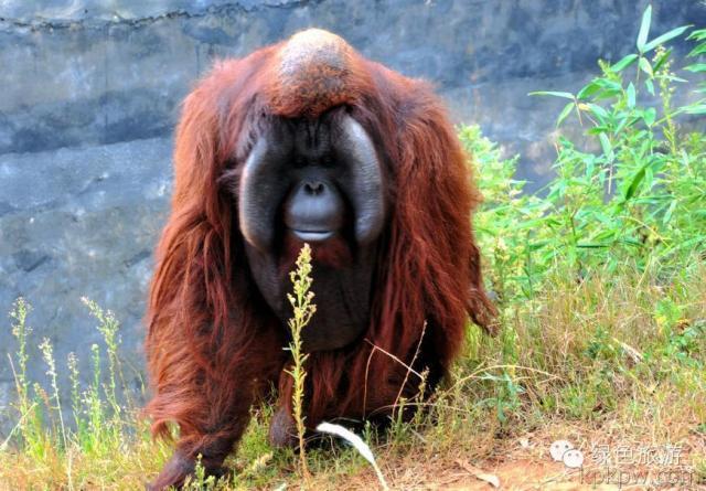 动物总动员之云南野生动物园