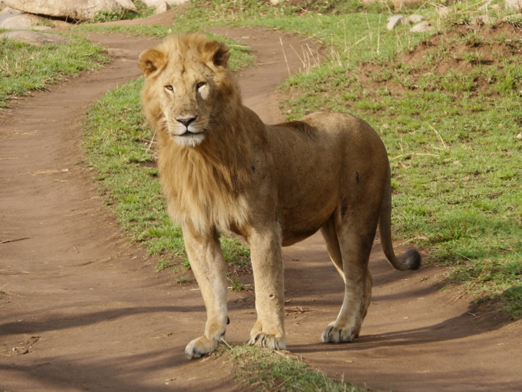 2013年9月 非洲观赏动物大迁徙