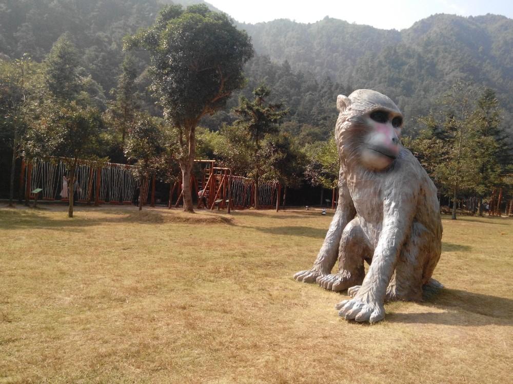 南美洲玻利维亚候_南美洲森林动物_南美洲森林动物分享展示