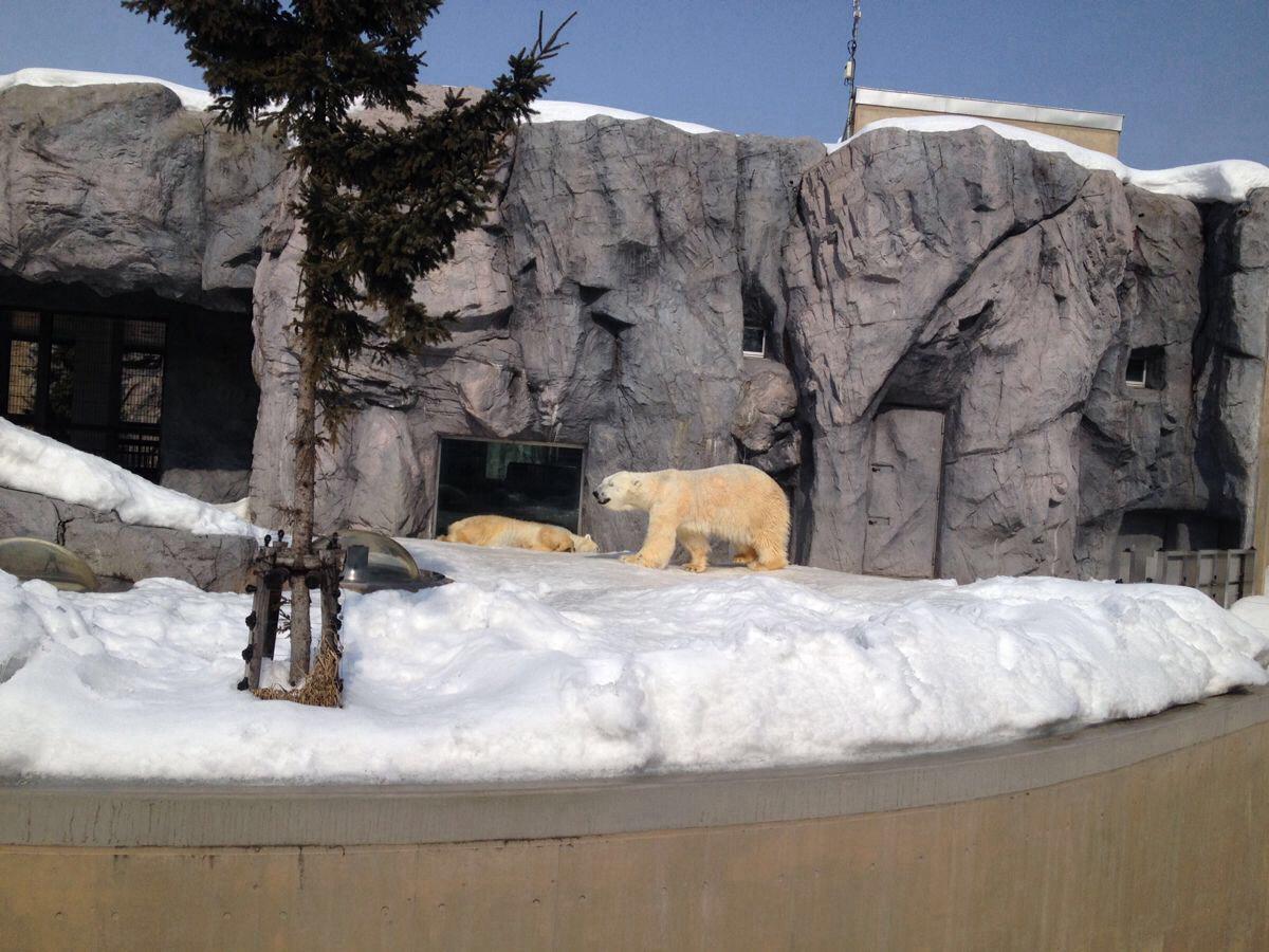 携程产品,订单号: 805006318 ,产品名称:日本札幌4-15日自由行常规自由行,【编号:53786】 产品链接:http://vacations.ctrip.com/freetravel/p53786s2.html### 计划了好几年的北海道冬季之行今年终于成行了!对于一个南方孩子来说,白茫茫的冰雪世界充满了异乎寻常的魅力。怀揣着满心期待与憧憬,向着北海道,出发! 行前Tips: 1.