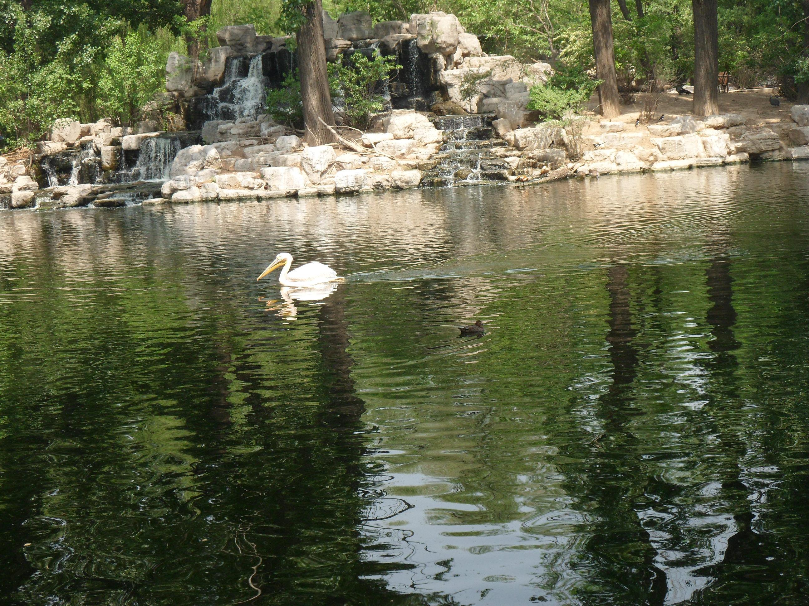 【携程攻略】北京北京动物园景点,北京动物园挺大的