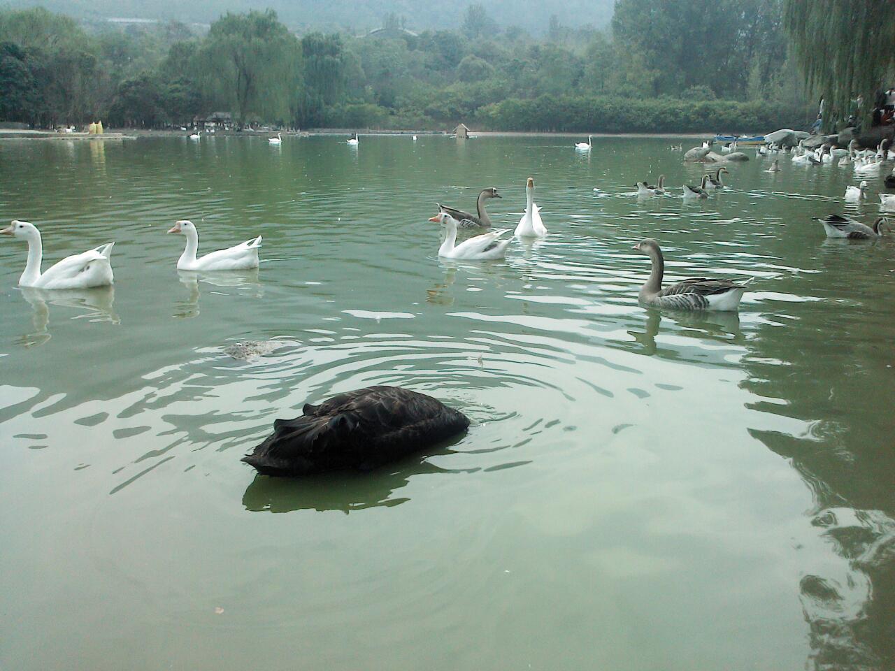 动物图片大全山水真实