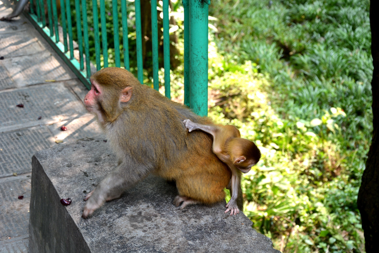 索溪峪的野生动物图片