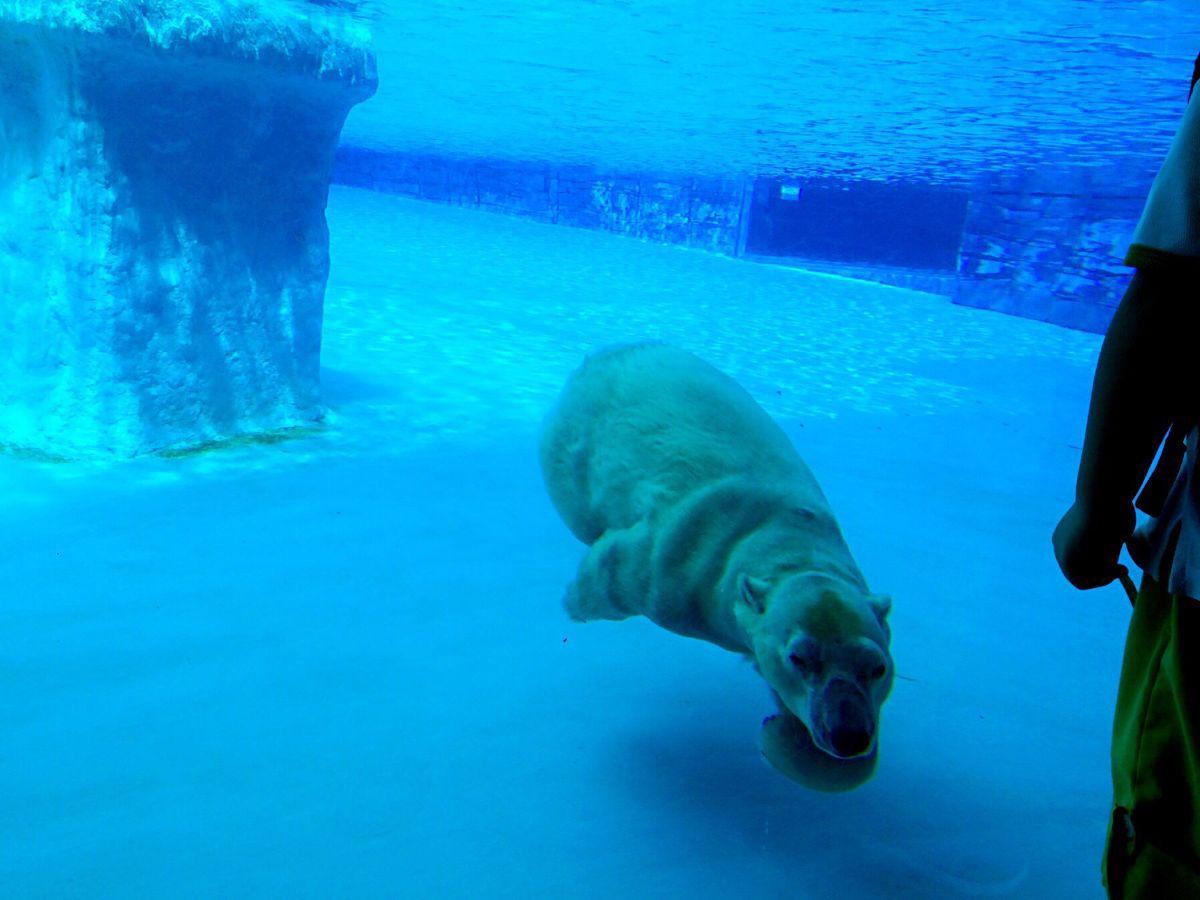 在水里水里最厉害的动物