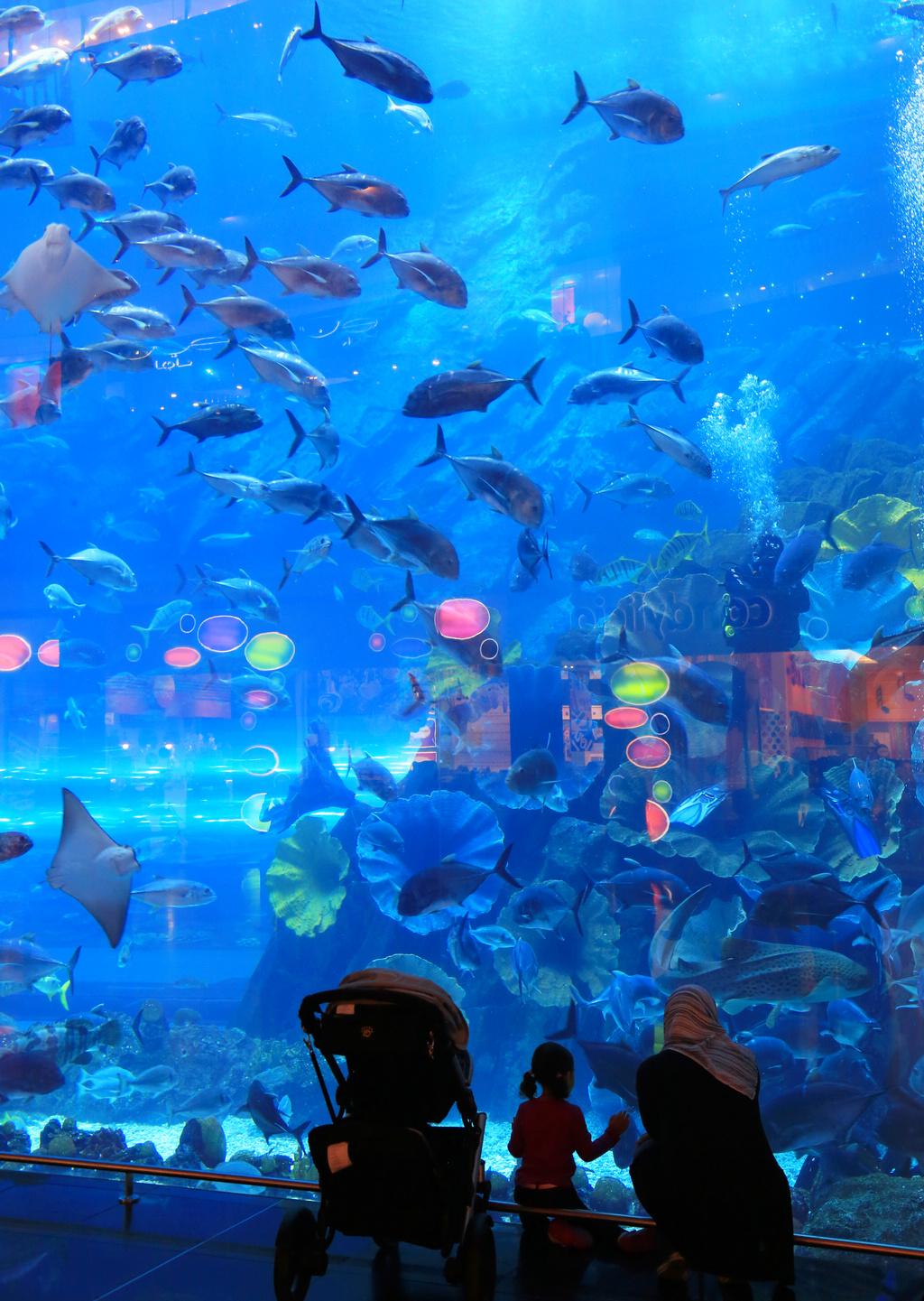 迪拜购物中心水族馆位于位于全球最高塔哈利法塔地下的大型购物中心迪拜商场,是号称全球之最的水族馆。迪拜购物中心水族馆于2008年11月开幕,水族馆观光廊长200米,据说进入了吉尼斯纪录。在迪拜mall逛的时候,这里是人气最旺的地方,很多家庭都喜欢这个水族馆,光影之中很有海底世界的感觉。