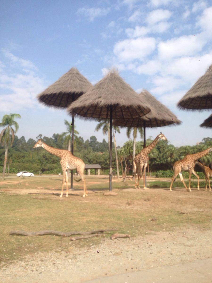 我的路线是 九点半 酒店接驳车 - 动物园南门-过马路去对面车站-动物