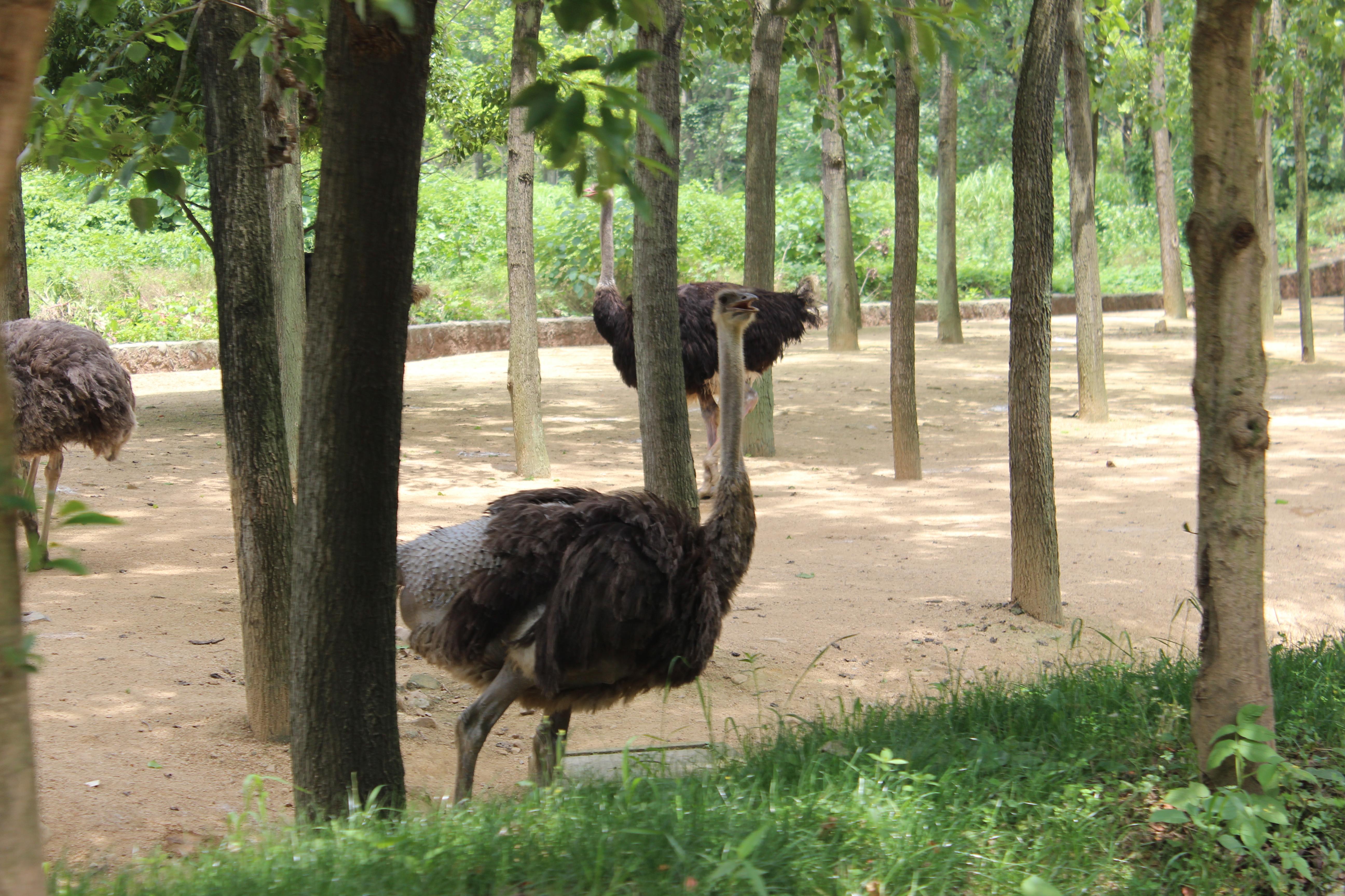 杭州野生动物世界之走过奥利威廉走过的路