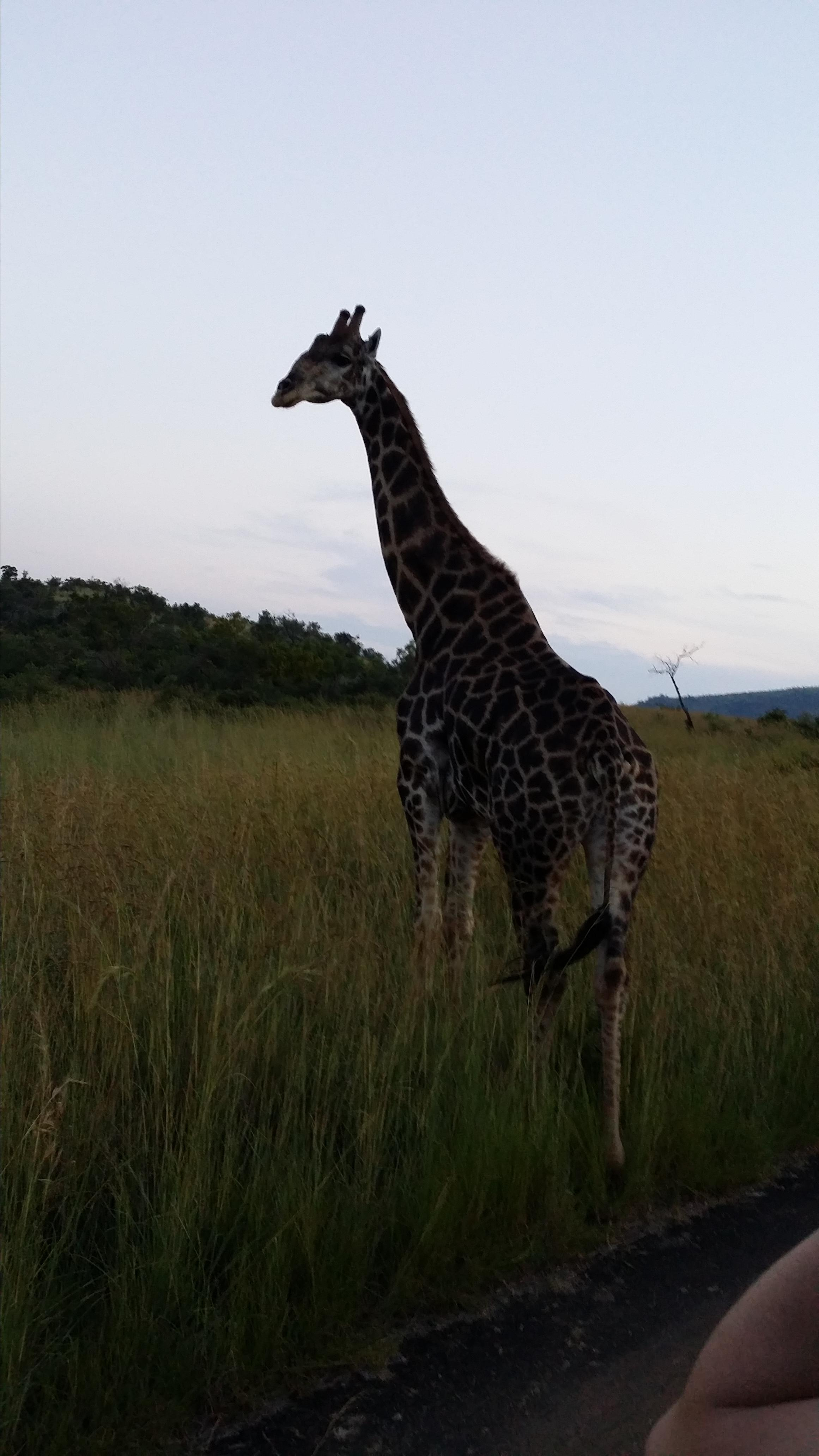 """南非动物种类丰富,除了众所周知的""""非洲五大""""之外"""