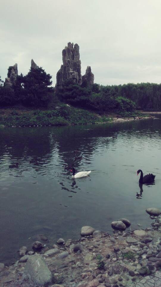 北京野生动物园一日游