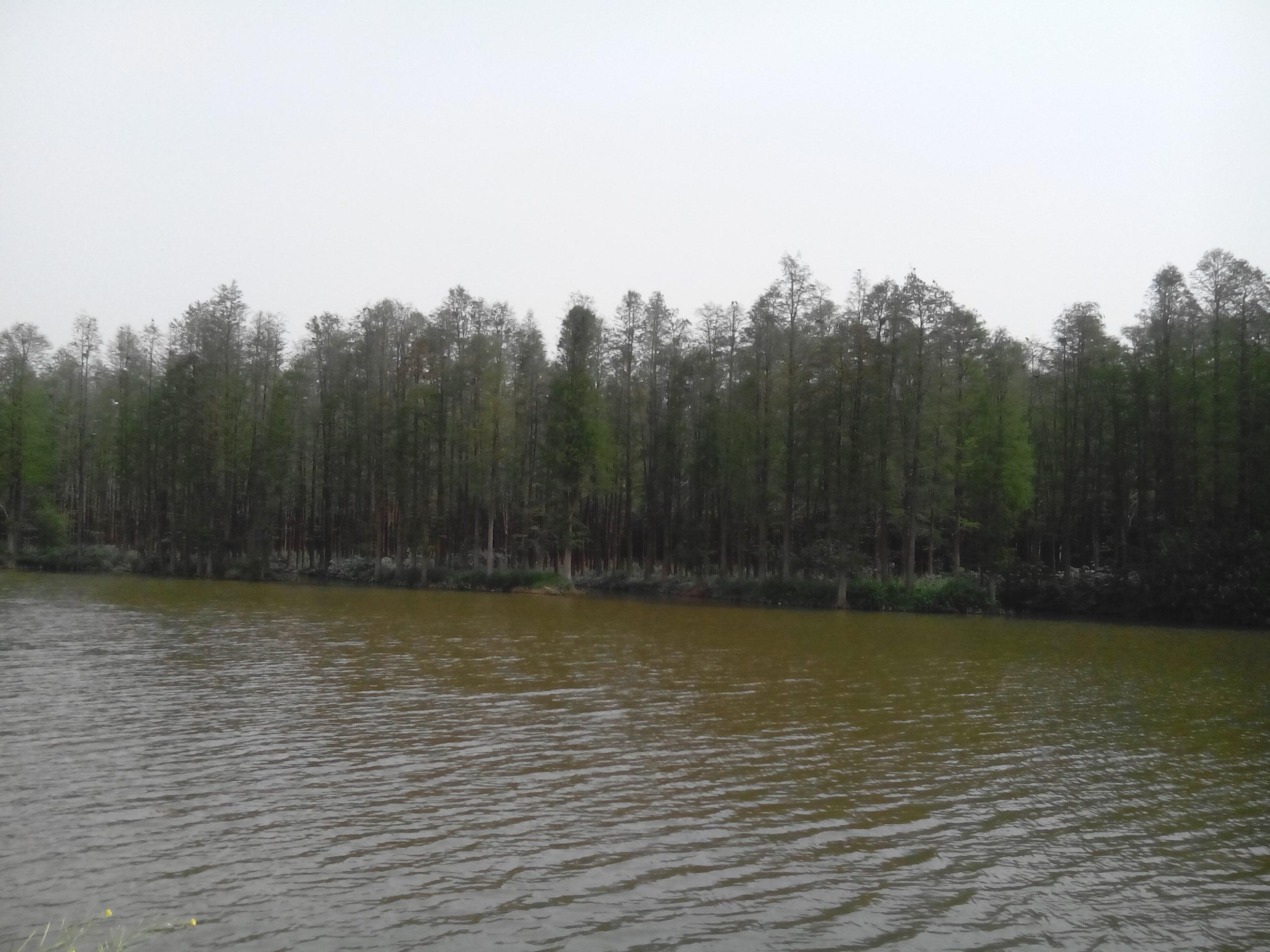 2014年五一节江苏泰州溱湖湿地和兴化李中森林公园2日游图片