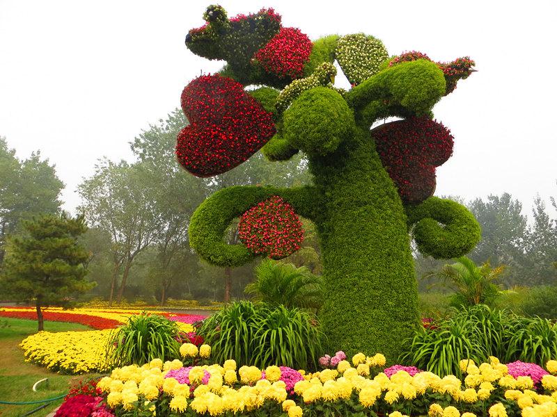 北京植物园赏秋菊