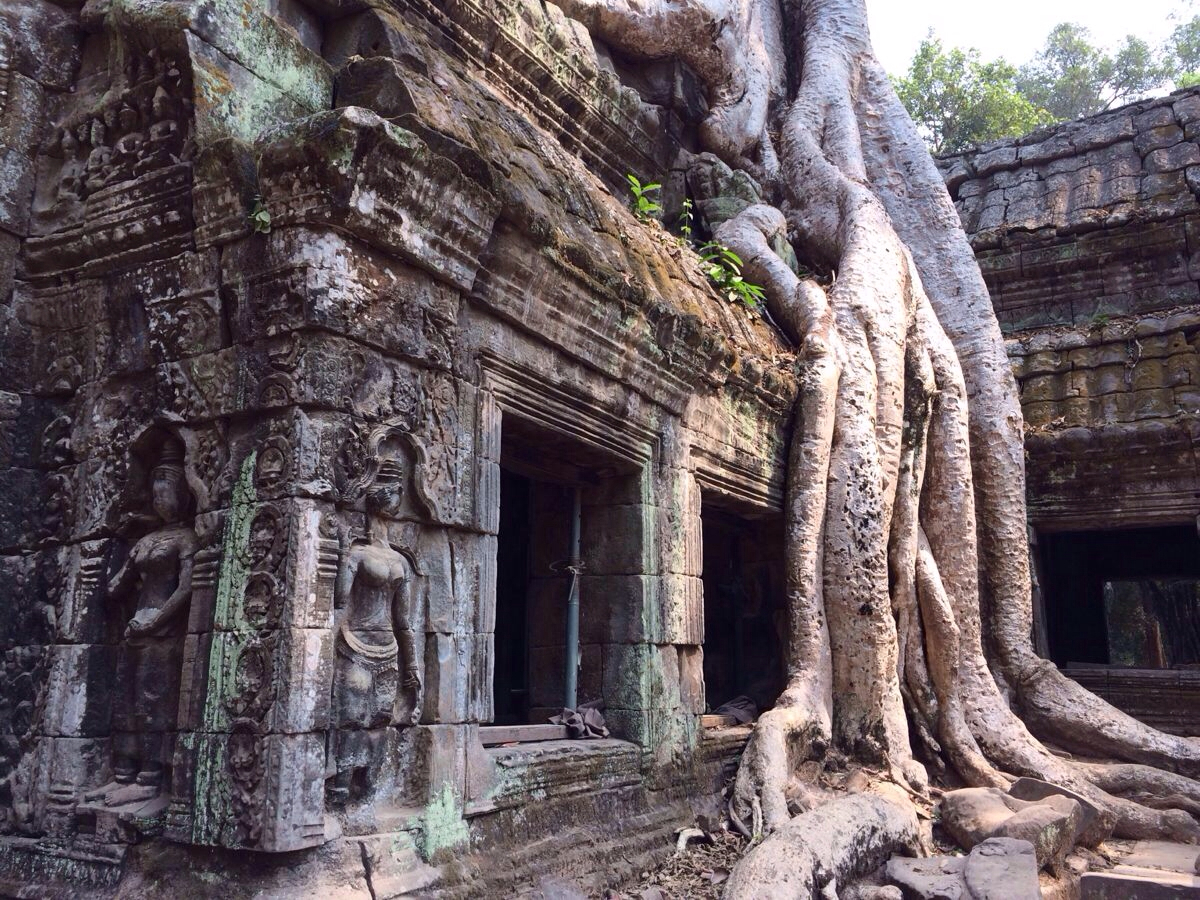 粗壮的树根树茎