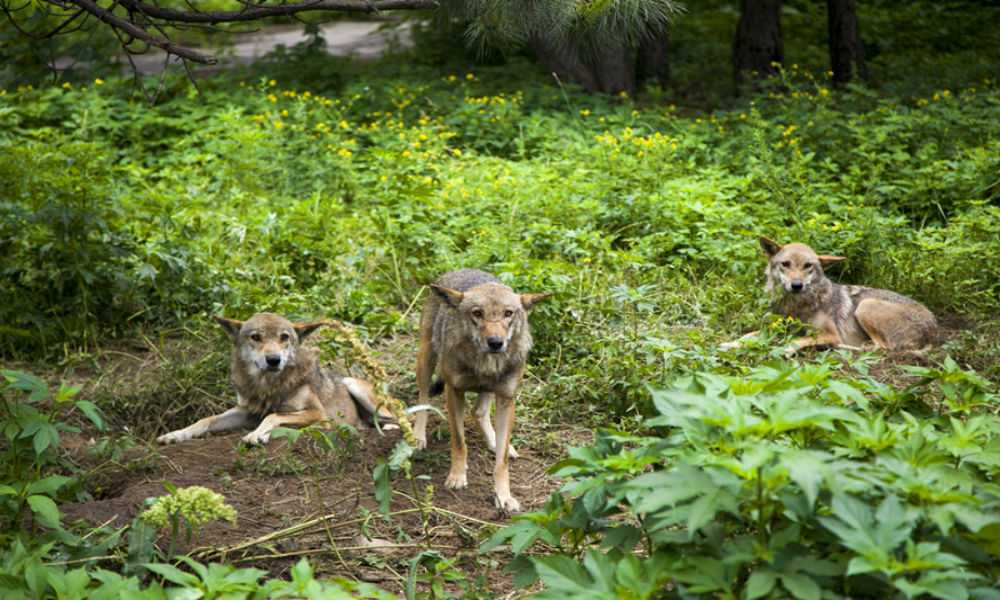 贵州森林野生动物园一日游图片