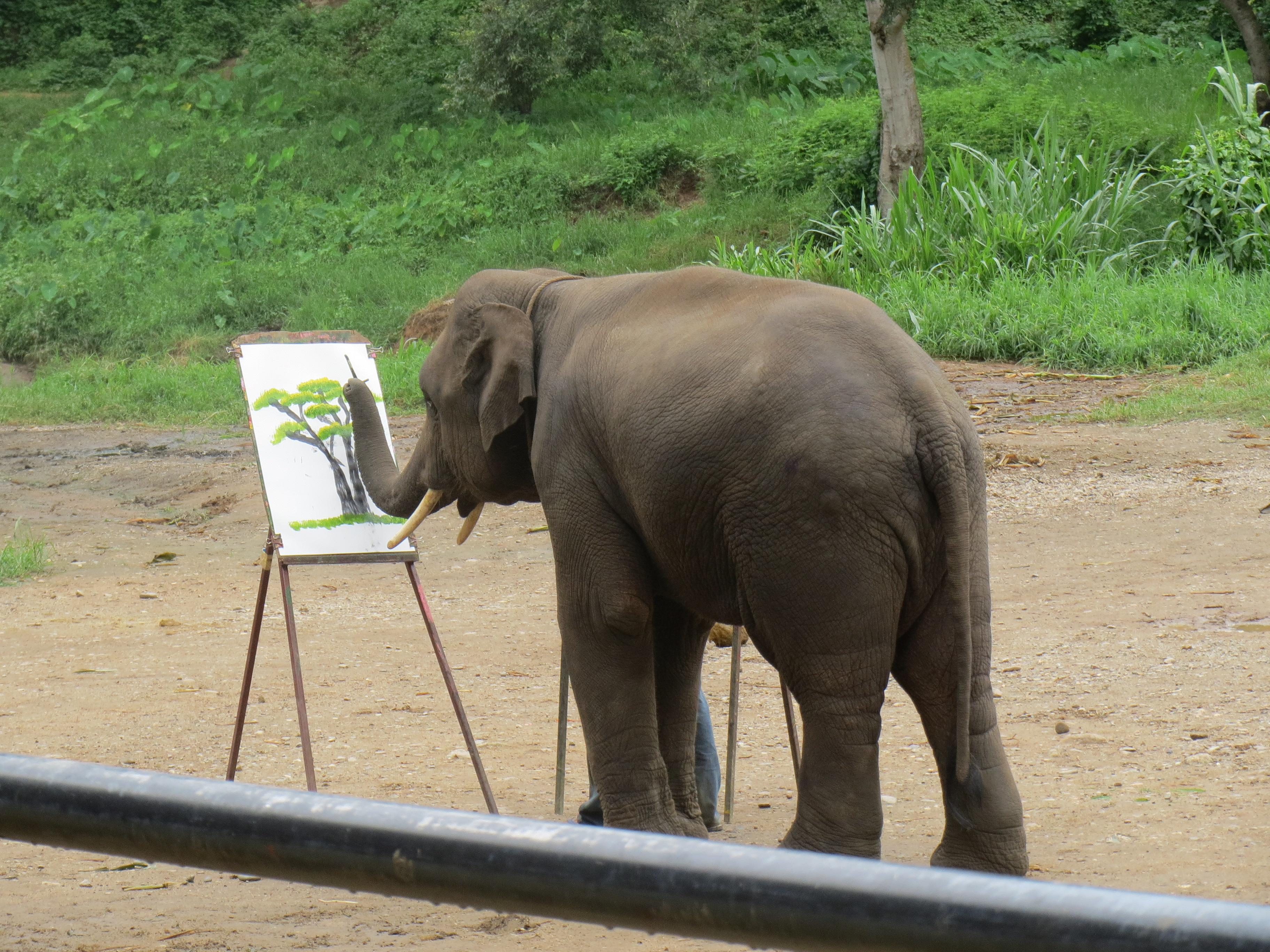 壁纸 大象 动物 3648_2736
