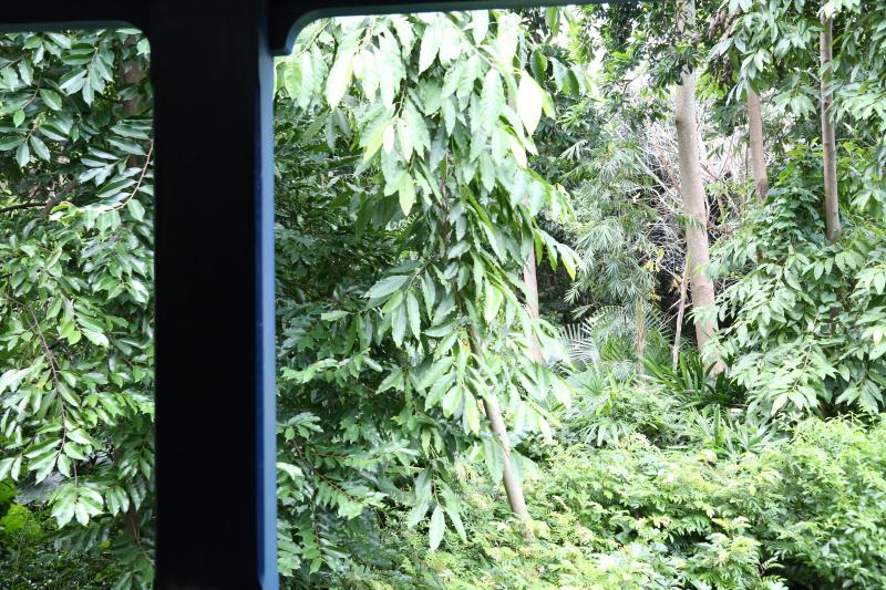 刚进去的时候坐在小火车上拍的```森林里有各种真的假的小动物