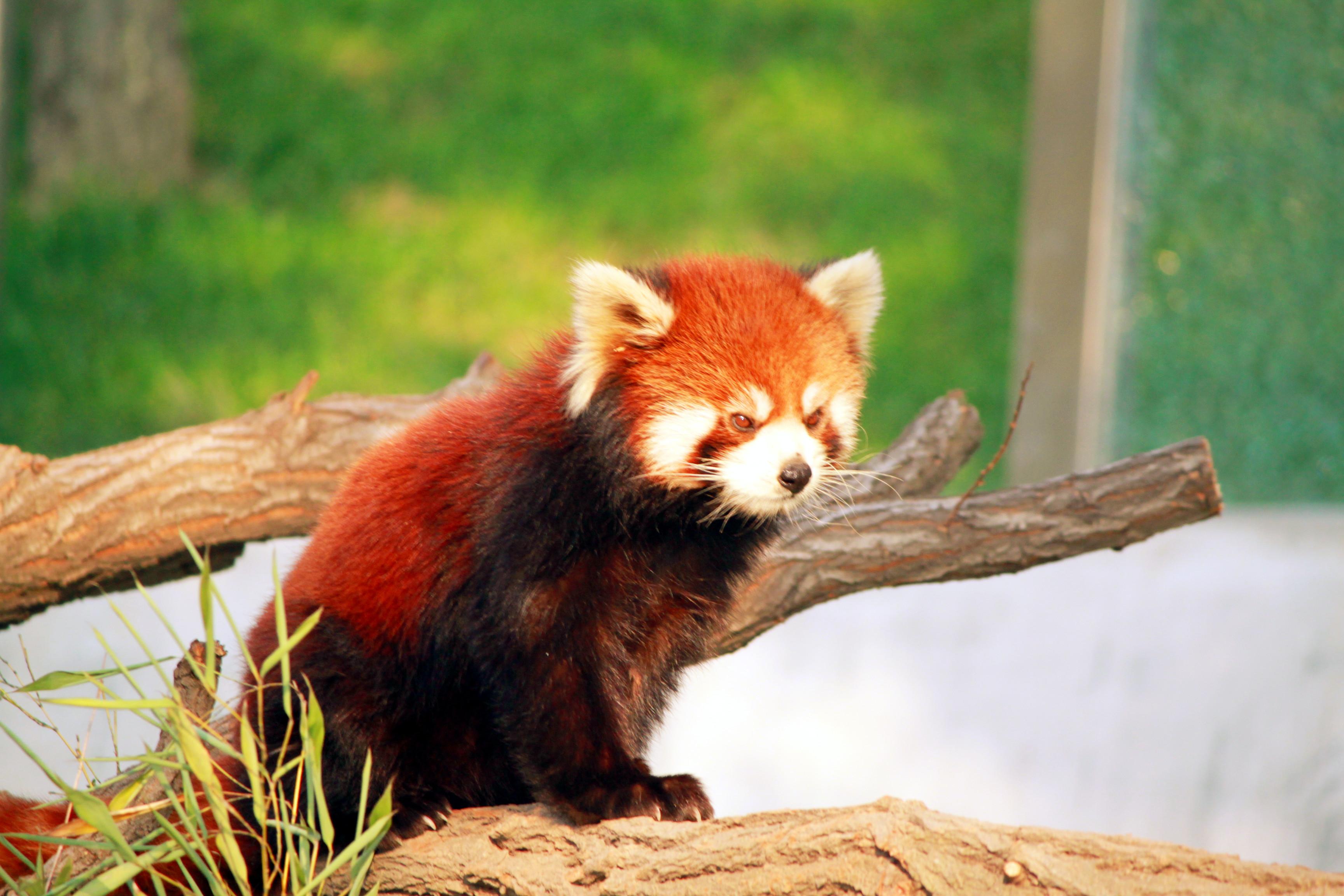 森林动物园熊猫馆】
