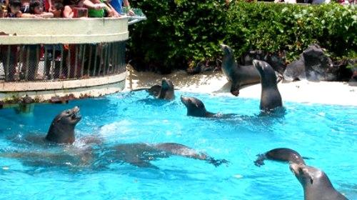 海洋生物公园是一个海洋哺乳动物公园,公园里有鸟类保护区和水族馆