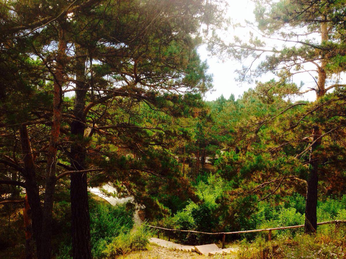 海拉尔西山国家森林公园图片