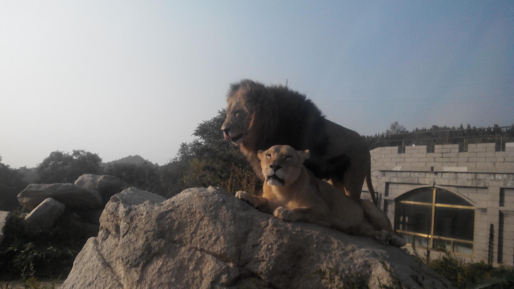 八达岭野生动物园 - 游记攻略【携程攻略】