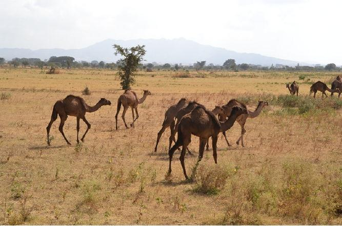 非洲草原上那最可爱的动物们